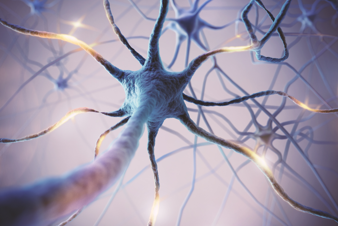 neurotechnologie Nederland